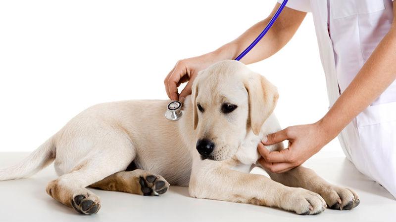 животное у ветеринара