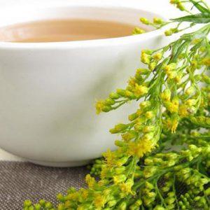 чай из золотарника